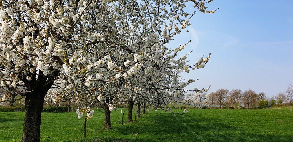 Wandelen in Limburg - Voeren